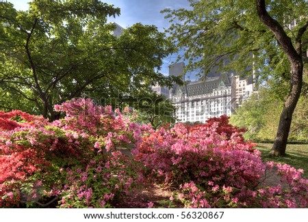 central Park south in the early morning with flowers in the foregorund - stock photo