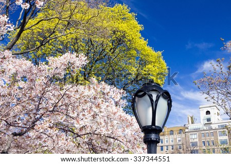 Central Park Spring Flowers Blooming in Manhattan, New York City - stock photo