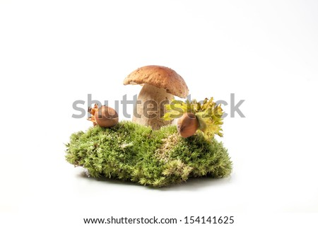 Cep mushroom with hazelnuts on forest moss over white - stock photo