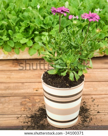 Ceramic Flower Pot In Front of Seedling Tray, Potted Purple Flower