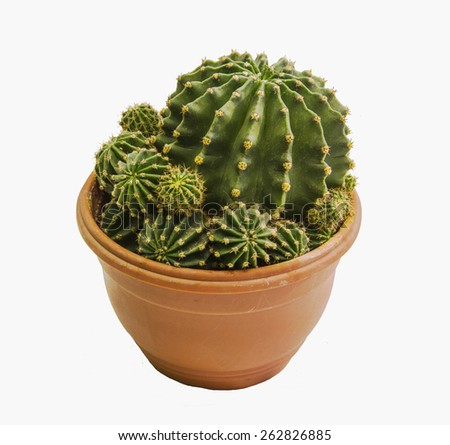 ceramic pot with a green prickly cactus isolate - stock photo