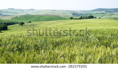 Cereal crops and farm in Tuscany - stock photo