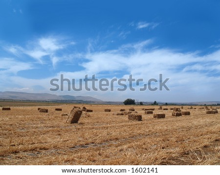 cereal cubes in trimmed wheat field withe blue cloudy sky - stock photo