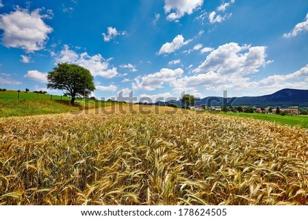 Cereal field breeze - stock photo