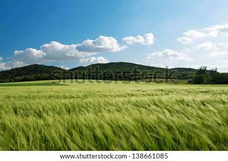 Cereal field in wind - stock photo