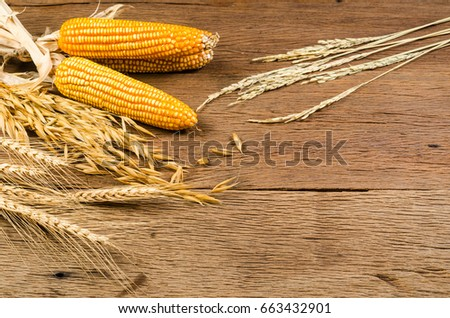 Cereal grains and seeds,corns on wooden board, agriculture products