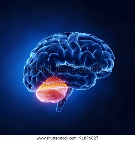 Cerebellum part - Human brain in x-ray view - stock photo