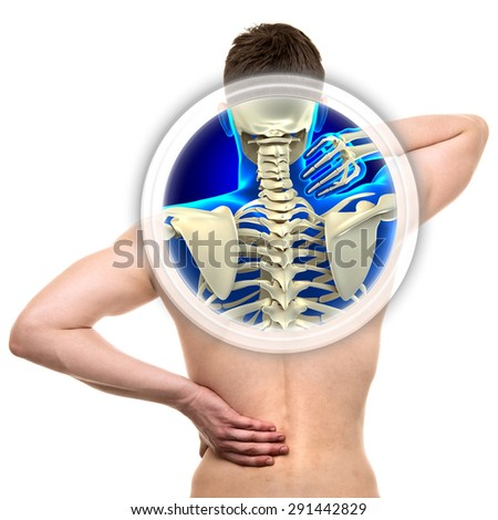 Cervical Spine isolated on white - REAL Anatomy concept - stock photo