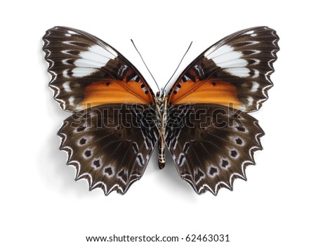 Cethosia chrysippe (Red Lacewing) (underside) - stock photo