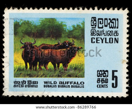 CEYLON - CIRCA 1969: A stamp printed in the Ceylon shows Wild Buffalo, Bubalus bubalis, circa 1969