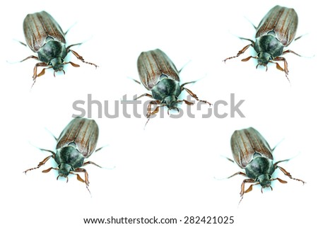 chafers closeup isolated on a white background - stock photo