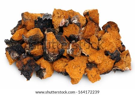 Chaga - birch mushroom. Chopped dried slices on white background - stock photo