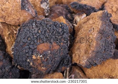 Chaga (Inonotus obliquus) chopped closeup. Medicinal birch fungus - stock photo