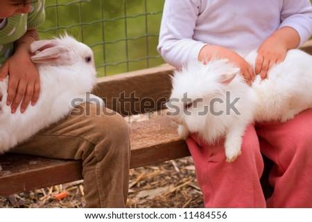 chaild hands hold little rabbit - stock photo