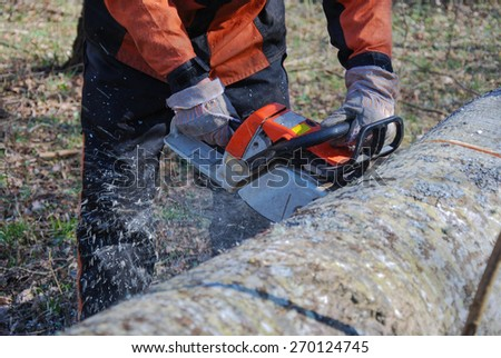 Chainsaw in action with chaindust when sawing a big tree trunk - stock photo