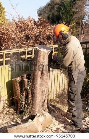 Chainsaw spraying sawdust as a tree is felled