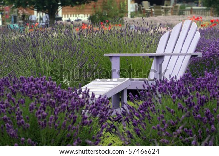 chair in the lavender - stock photo
