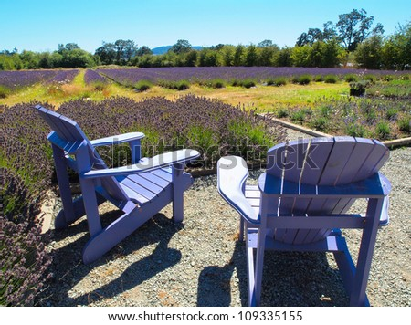 Chairs on a lavender field in bloom under summer sun - stock photo