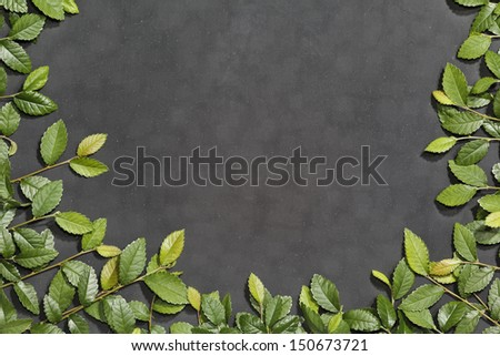 Chalkboard framed in slate effect of elm branches. - stock photo