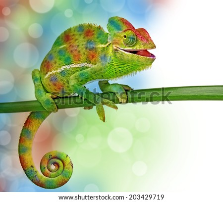 chameleon and colors - stock photo
