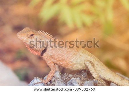chameleon climbing on rock with gradient