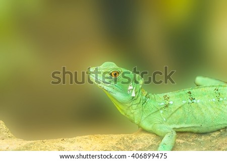 Chameleon is facing a tree branch - stock photo