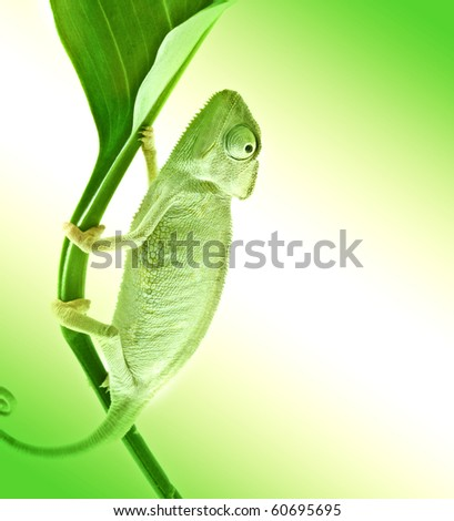 Chameleon on flower. - stock photo