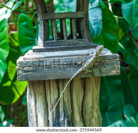 chameleon on the wood in the forest - stock photo