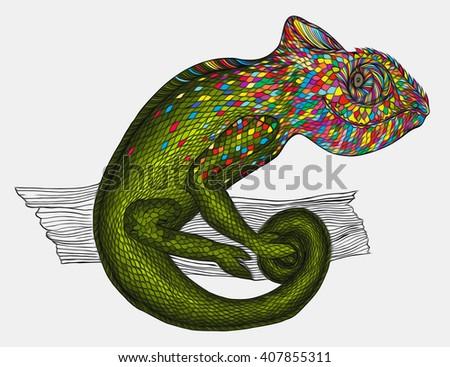 Chameleon.Profile Lizard. - stock photo