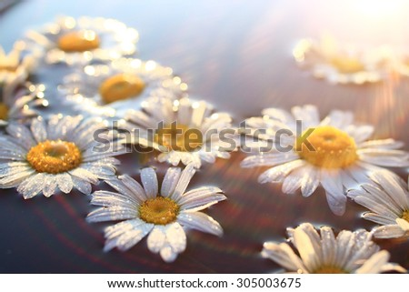 Chamomile background nature - stock photo