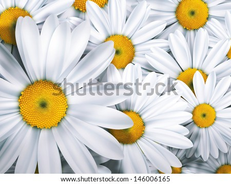 Chamomile close up - summer background - stock photo