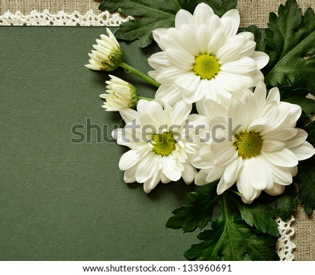 Chamomile composition on green carton background
