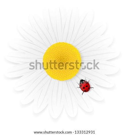 Chamomile flower and ladybird isolated on white background. Illustration. - stock photo