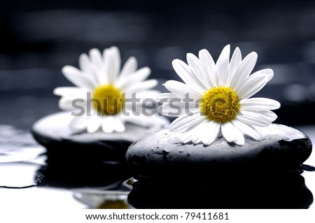 chamomile flower and therapy stones - stock photo