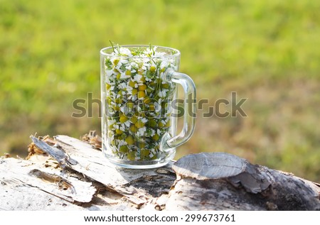 Chamomile flowers in a glass mug on tree stump.