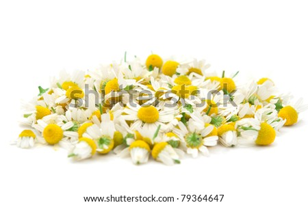 chamomile flowers on white background - stock photo