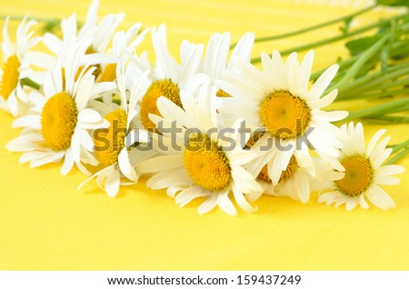 Chamomile flowers on yellow background - stock photo