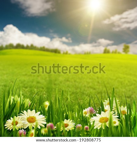 Chamomile harmony, abstract natural landscape for your design - stock photo