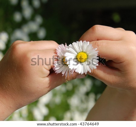 chamomile in childs hands