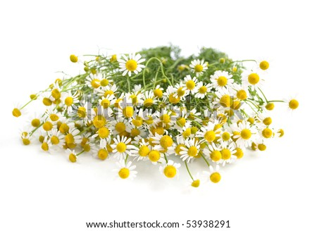 Chamomile on a white background - stock photo