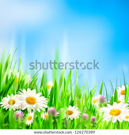 Chamomile symphony. Abstract natural backgrounds for your design - stock photo