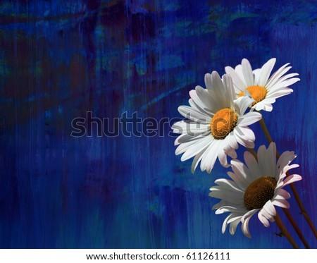 Chamomiles on a grunge background - stock photo