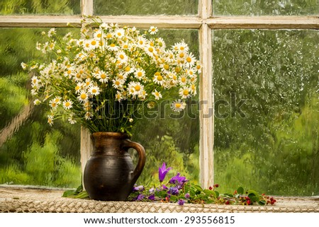 chamomiles on the window sill in a sunny rainy day - stock photo