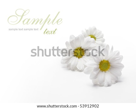 chamomiles on white - stock photo