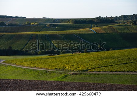 Champagne vineyards in the Cote des Bar area of the Aube department near to Baroville, Champagne-Ardennes, France, Europe