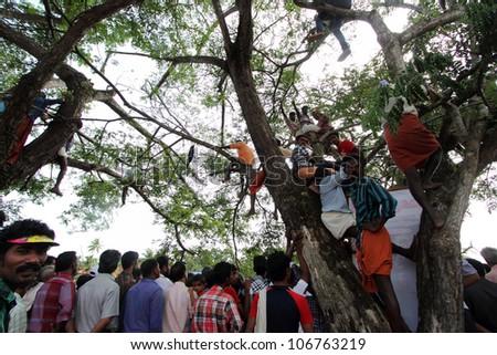 CHAMPAKKULAM, INDIA - JUL 03 : Spectators climbed on trees to watch the Snake boat racing at the banks of Pumba river on July 03, 2012 at Champakkulam, Kerala, India. - stock photo