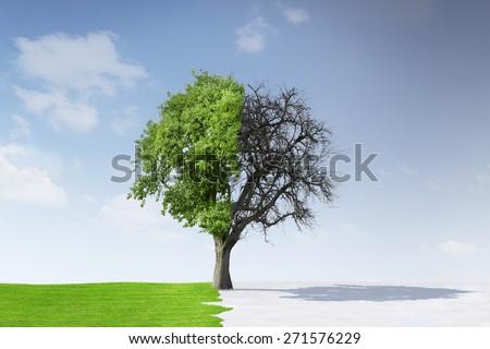 Change of Seasons - stock photo