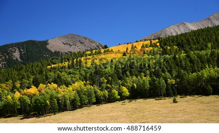 changing aspen trees in fall on la veta pass in the mountains of  colorado