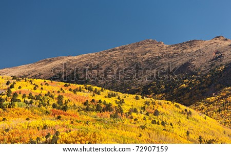 Changing aspens in the Colorado mountains. - stock photo