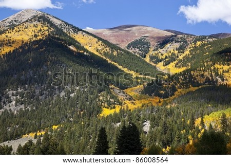Changing colors of the Aspen Trees in the Colorado Rocky Mountains